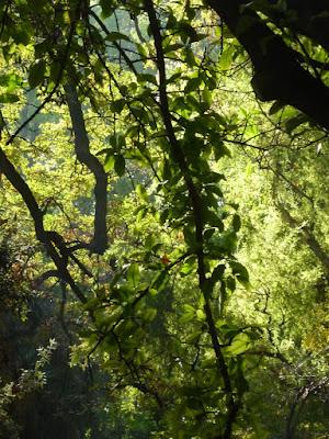 La luz del sol entre las ramas del Jardín Botánico de Valencia