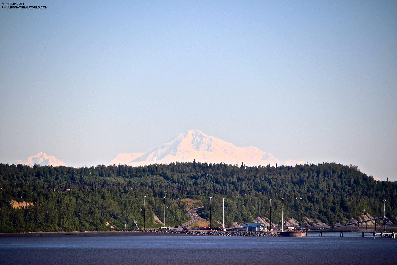 5ed0b4092ff83 Alaskan Summer Nights | Phillip's Natural World 1.0.2