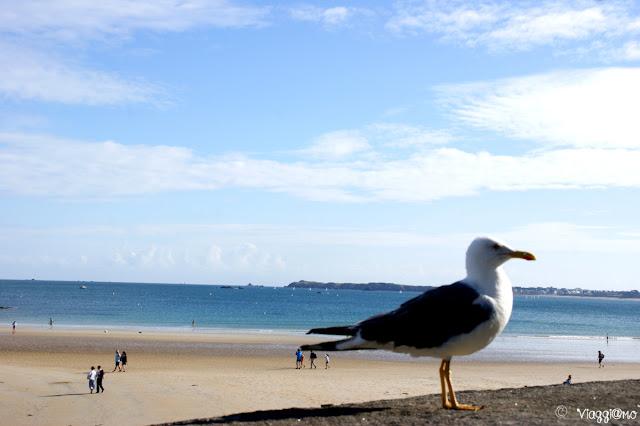 Eventail la spiaggia cittadina di Saint Malo