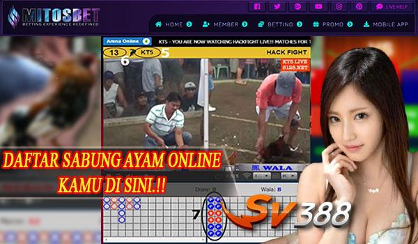 Sv388 Adu Ayam Online