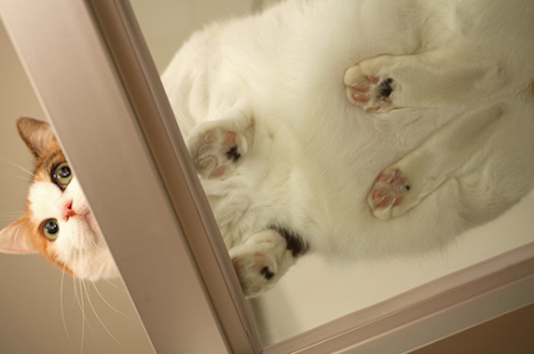 10+ Cat Paws That Are Just Purrfect
