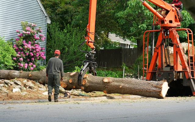 The Best Tree Removal Service For Your Benefits