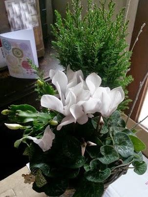 Bunches UK Christmas Plants the Frosty Flower Basket review