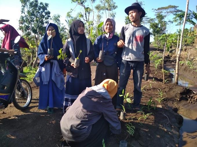 PMII Gelar Penghijauan di Lombok Timur