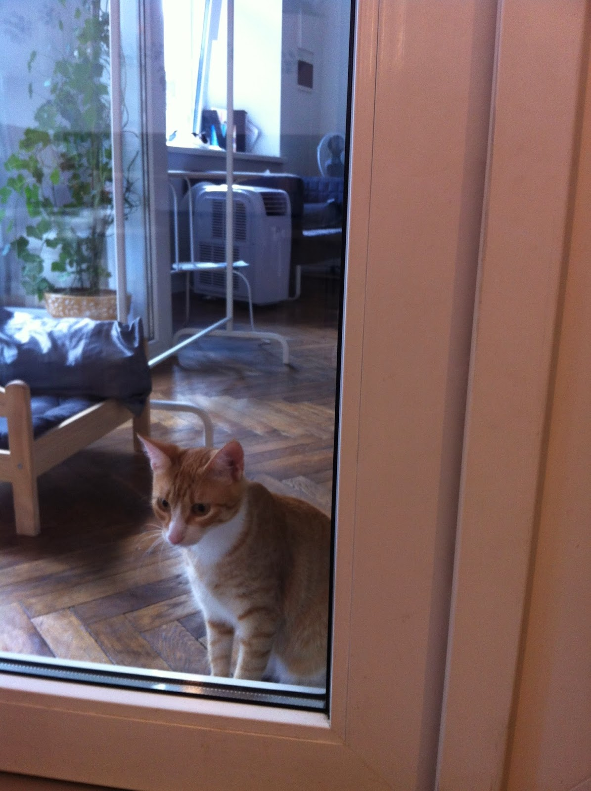 an orange cat in the window of the cat cafe
