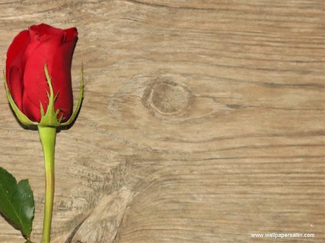 Rose Wallpaper -7