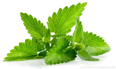 peppermint to get rid of rats