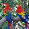 Jenis Dan Harga Burung Macaw