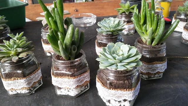 Suculentas en frasco de vidrio decorados