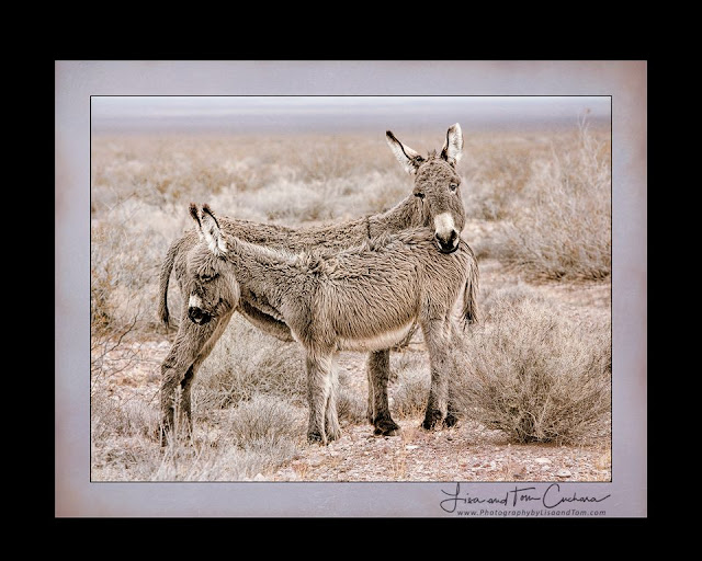 wild donkey mother and baby; photography by Connecticut photographer Tom Cuchara www.lisaandtomphotography.com