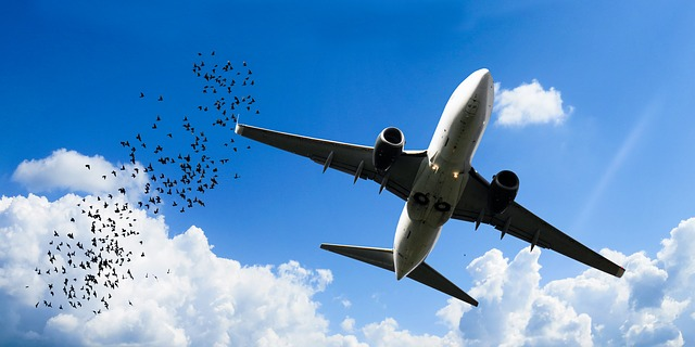 aircraft and birds strikes