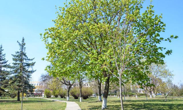 Весна в Дубоссарах 2020