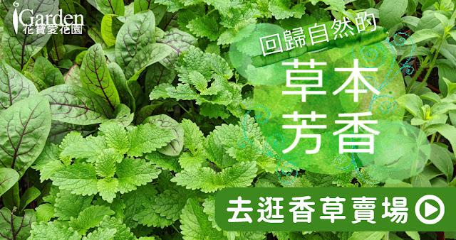 iGarden 香草香料種子 賣場