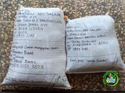 Benih Padi Pesanan  JALALUDDIN ABDSALAM Aceh Utara, Aceh.  Benih Sesudah di Packing