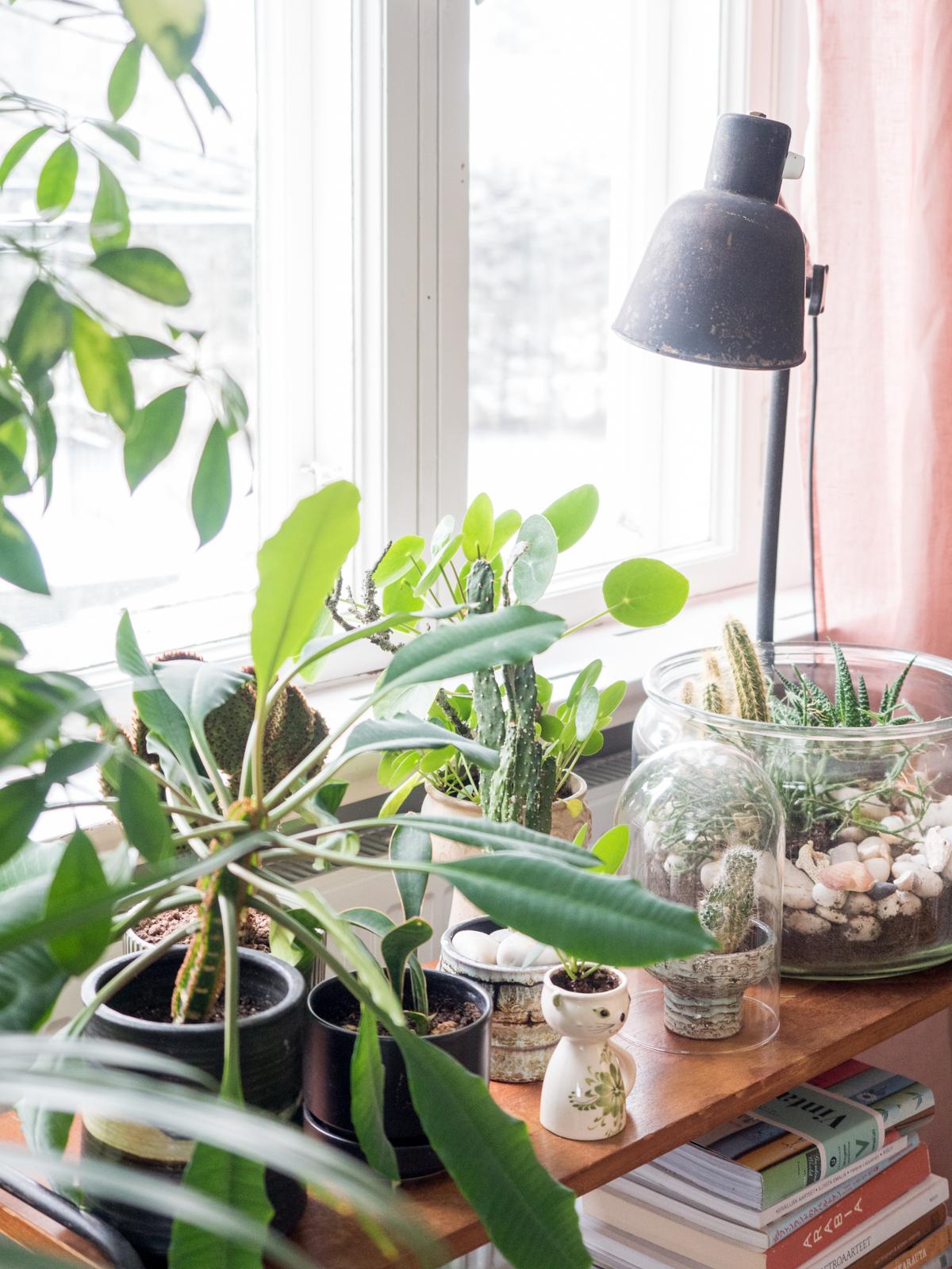 viherkasvien ryhmittäminen