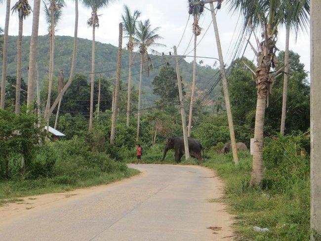 Слонов видут домой