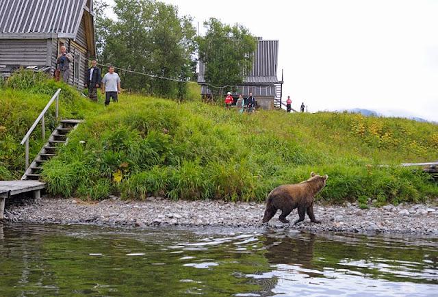 поведение +при встрече +с медведем