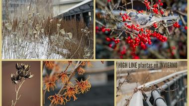 High Line. Plantas durante el invierno.