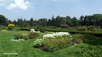 Rose garden in the background - Elizabeth Park, West Hartford, CT