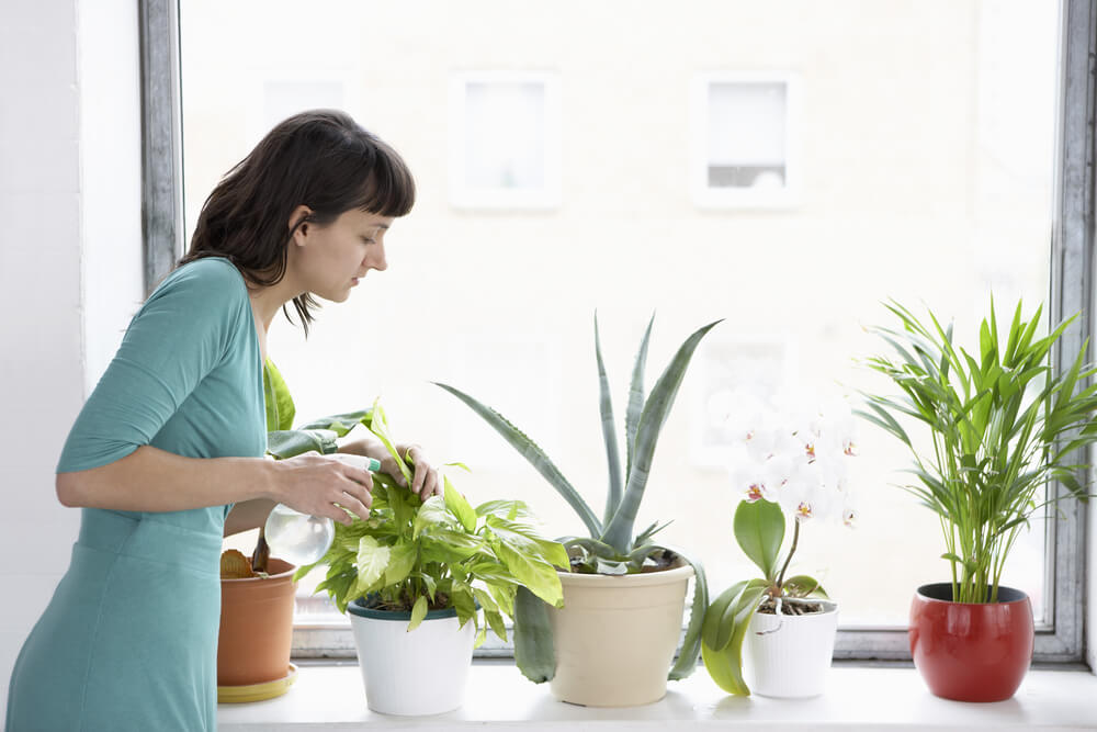 Easiest Tips To Care For Your Plants. You May Try!!!