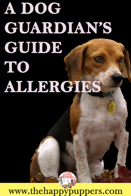 All you need to know about allergies in dogs