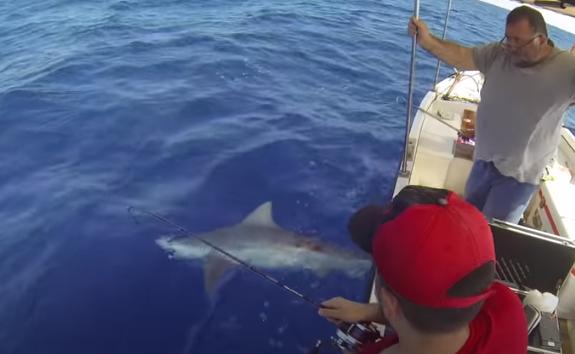 Πήγε για ψάρεμα στην Μιρσίνη και έπιασε λευκό καρχαρία video