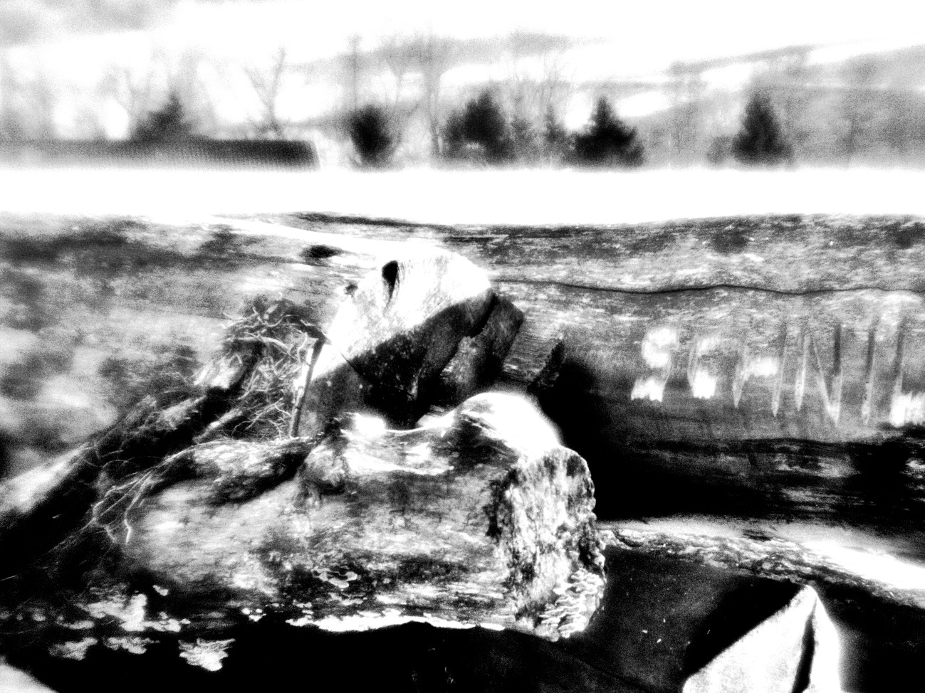 Potentielles Brennholz in Black Noir