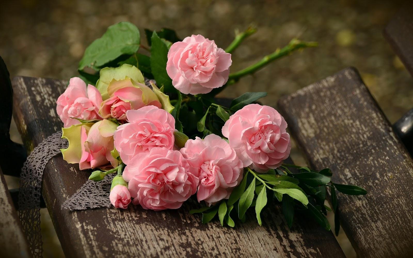 gambar bunga mawar | ros