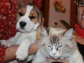 convivência cães e gatos