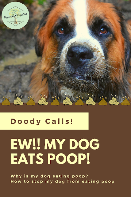 Doody calls: What to do with a coprophagia canine