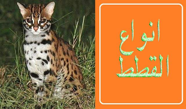 """""""القطط"""" """"القطط في الحلم"""" """"القطط الشيرازي"""" """"القطط السيامي"""" """"القطط الرومي"""" """"القطط ف الحلم"""" """"القطط الصغيرة"""" """"القطط الهيمالايا"""" """"القطط الفرعونية"""" """"القطط السوداء"""" """"القطط البلدي"""" """"القطط british"""" """"القط bobo"""" """"قطط bkh"""" """"قطط birman"""" """"القط british"""" """"قطط black"""" """"قطط bread"""" """"للقطط betamox"""" """"القط.com والفار"""" """"قطط cute"""" """"coryza القطط"""" """"قطط calico"""" """"cfa القطط"""" """"القط coby"""" """"قطط comics"""" """"القط coon"""" """"قطط dlh"""" """"despacito القطط"""" """"قطط dsh"""" """"القط dz"""" """"قطط dj"""" """"داء القطط doc"""" """"القط doc"""" """"القطط en francais"""" """"القط en francais"""" """"داء القطط english"""" """"القطط الكبيرة en francais"""" """"القطط felix"""" """"القطط feline"""" """"القطط fight"""" """"القطط fip"""" """"قطط feline"""" """"قطط facebook"""" """"friv القطط"""" """"قطط felix"""" """"قطط gif"""" """"gانواع القطط"""" """"قطط gifs"""" """"gif القطط"""" """"قطط ginger"""" """"القط ginger"""" """"قطط google"""" """"مود القطط gta sa"""" """"قطط hd"""" """"انواع القطط"""" """"hashtag القطط"""" """"جرثومة القطط igg igm"""" """"داء القطط igm"""" """"داء القطط in english"""" """"بيع القطط islamqa"""" """"بيع القطط islamweb"""" """"تحليل داء القطط igg igm"""" """"تحليل داء القطط igg"""" """"تحليل داء القطط igg ايجابي"""" """"القط jeux"""" """"القط jerry"""" """"القطط kitten"""" """"القط kiko"""" """"قطط khao manee"""" """"قطط kittens"""" """"قطط kitty"""" """"للقطط kitty"""" """"اكل القطط kitekat"""" """"القط kucing"""" """"القطط life"""" """"قطط long hair"""" """"قطط love"""" """"القطط leash"""" """"القطط ل"""" """"القطط mktbtk"""" """"القطط memes"""" """"قطط maine coon"""" """"قطط moon face"""" """"قطط maine coon للبيع"""" """"قطط munchkin"""" """"قطط manx"""" """"قطط mp4"""" """"القط ne demek"""" """"قطط olx"""" """"قطط ouedkniss"""" """"قطط olx اسكندرية"""" """"قطط ozx"""" """"القطط ا"""" """"اسعار القطط olx"""" """"القطط pdf"""" """"القطط ppt"""" """"قطط persian"""" """"قطط png"""" """"قطط pinterest"""" """"القط pdf"""" """"القط pink"""" """"القط png"""" """"القطط ق"""" """"قطط quotes"""" """"قطط ragdoll"""" """"القط rubble"""" """"القط ragdolls"""" """"اكل القطط reflex"""" """"اكل القطط royal canin"""" """"طعام القطط reflex"""" """"طعام القطط royal canin"""" """"قطط red"""" """"القطط sphinx"""" """"القطط scottish fold"""" """"قطط scottish fold"""" """"قطط sphynx"""" """"قطط siamos"""" """"قطط siamois"""" """"القط sphinx"""" """"قطط snowshoe للبيع"""" """"القط tom المتكلم"""" """"القط tom"""" """"قطط tabby"""" """"قطط teacup"""" """"قطط tik tok"""" """"قطط tumblr"""" """"القط tom 2"""" """"القط translation"""" """"القطط vs الخيار"""" """"القطط vs الاطفال"""" """"القطط vs الاطفال مضحك جدآ 2020"""" """"قطط"""