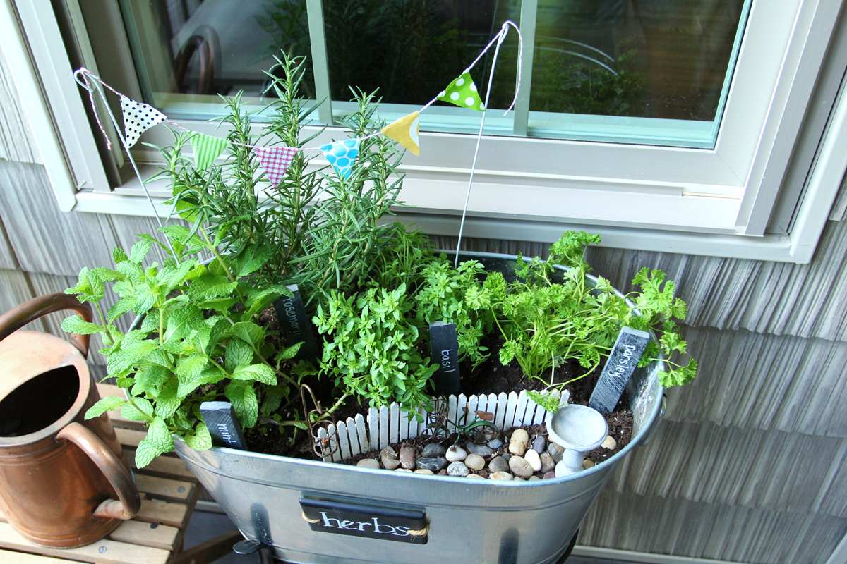 Miniature Garden Party Of Herbs