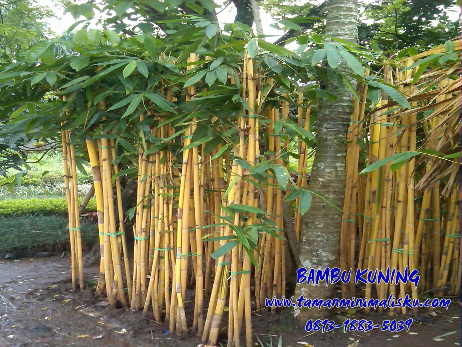 Taman Minimalis Bambu Jepang