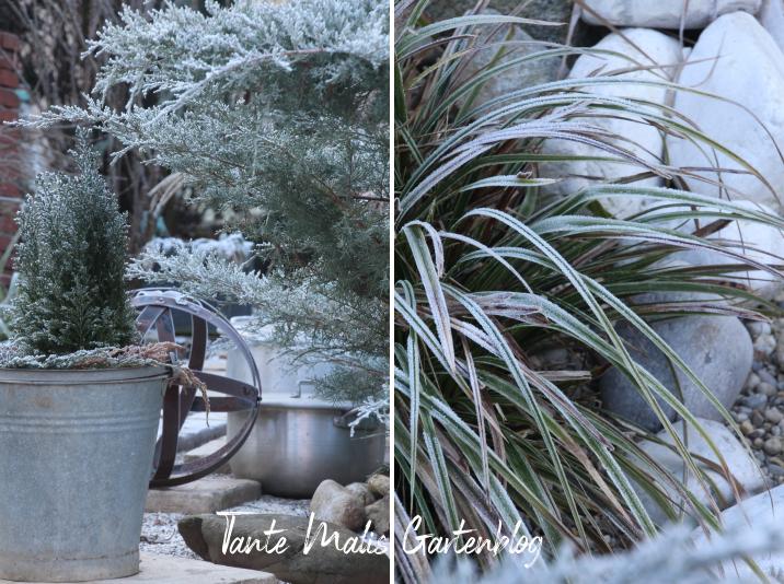 Mit Frost überzogene Gartenpflanzen