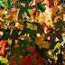 Dove andare per fotografare i colori dei boschi in autunno