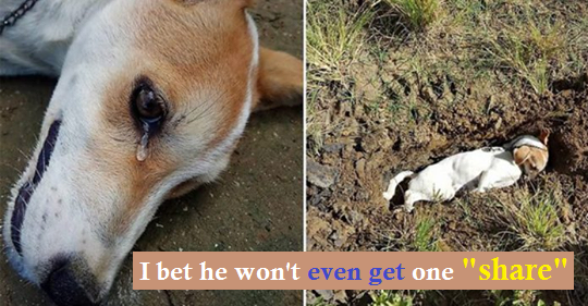 His dog did not stop barking overnight. The next day, he found his dog lying on the ground dying