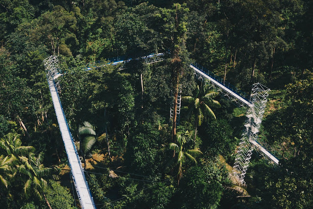 FOREST RESEARCH INSTITUTE MALAYSIA (FRIM), KEPONG