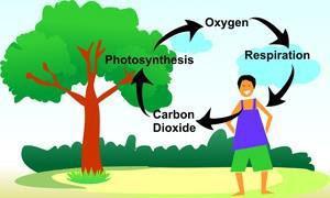 ऑक्सीजन चक्र