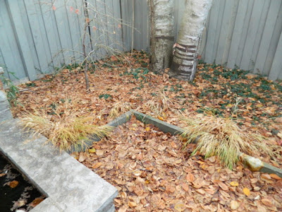 Toronto Cabbagetown Backyard Fall Cleanup Before by Paul Jung Gardening Services--a Toronto Organic Gardener