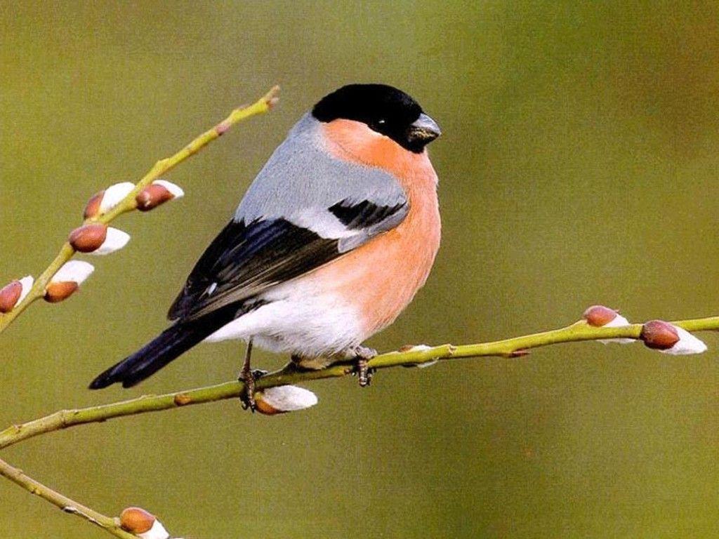 birds animals pictures