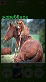 жеребенок забрался на спину лошади, которая лежит на земле