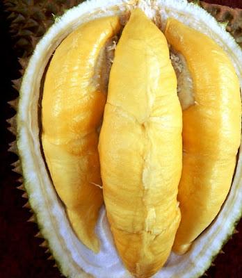 Manfaat Biji Durian Bagi Kesehatan