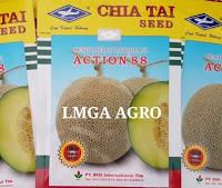 Cara beli benih, Cap Kapal Terbang, Harga murah, LMGA AGRO, Chia Tai Seed, Bisi International
