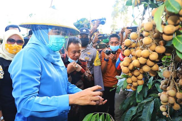 wisata lumajang klengkeng kateki bunadi wonogriyo