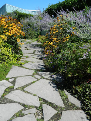 Russian Sage and Rudbeckia along path at the Toronto Botanical Garden by garden muses-not another Toronto gardening blog