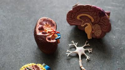 人工智慧醫療精準預測!!老人癡呆可以開始有效預防了嗎?