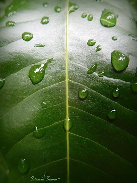 Foglia con gocce di pioggia