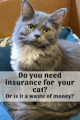 Do cats need health insurance?