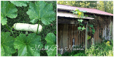 Easy to Grow Plants, shared by Mixed Bag Mama  at The Chicken Chick's Clever Chicks Blog Hop