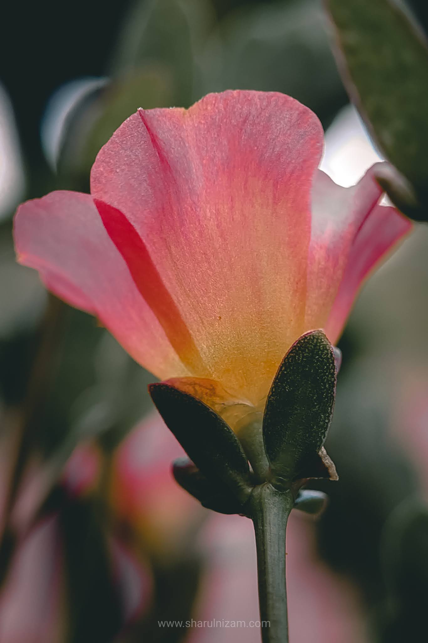 10 Keping Gambar Mobile Macro Photography Using Samsung A52 And Lensbong Nikon 35 mm)